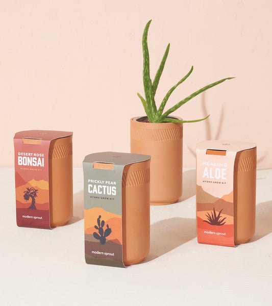 Modern Sprout Terracotta Kit - Cactus Blend