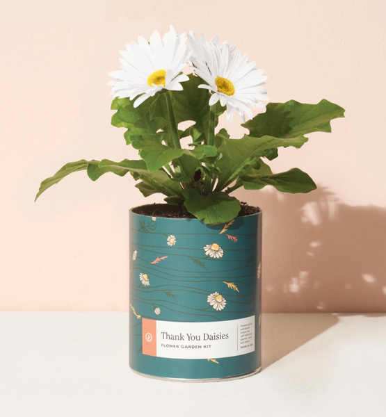 Modern Sprout Waxed Planter - Thank You Daisies