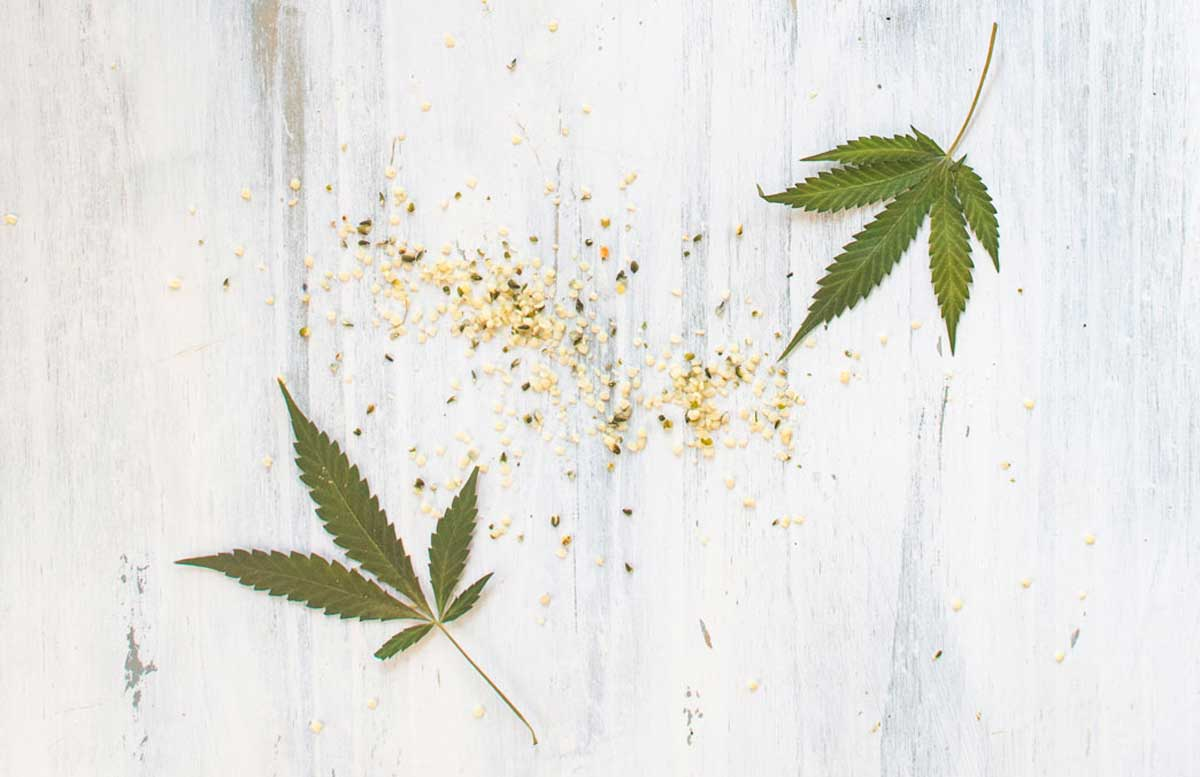 Cannabis and hemp fan leaves and seeds