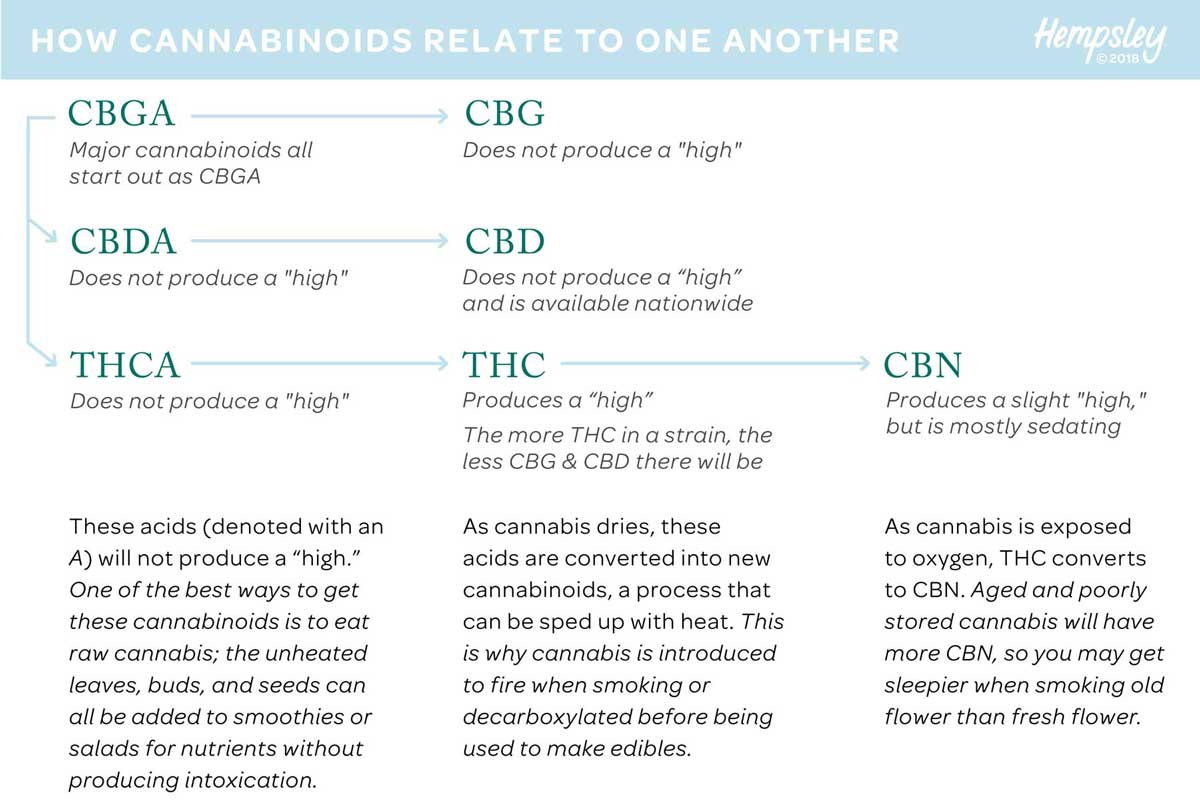 Flow chart outlining the formation of cannabinoids from CBGA to THCA, CBDA, and CBN