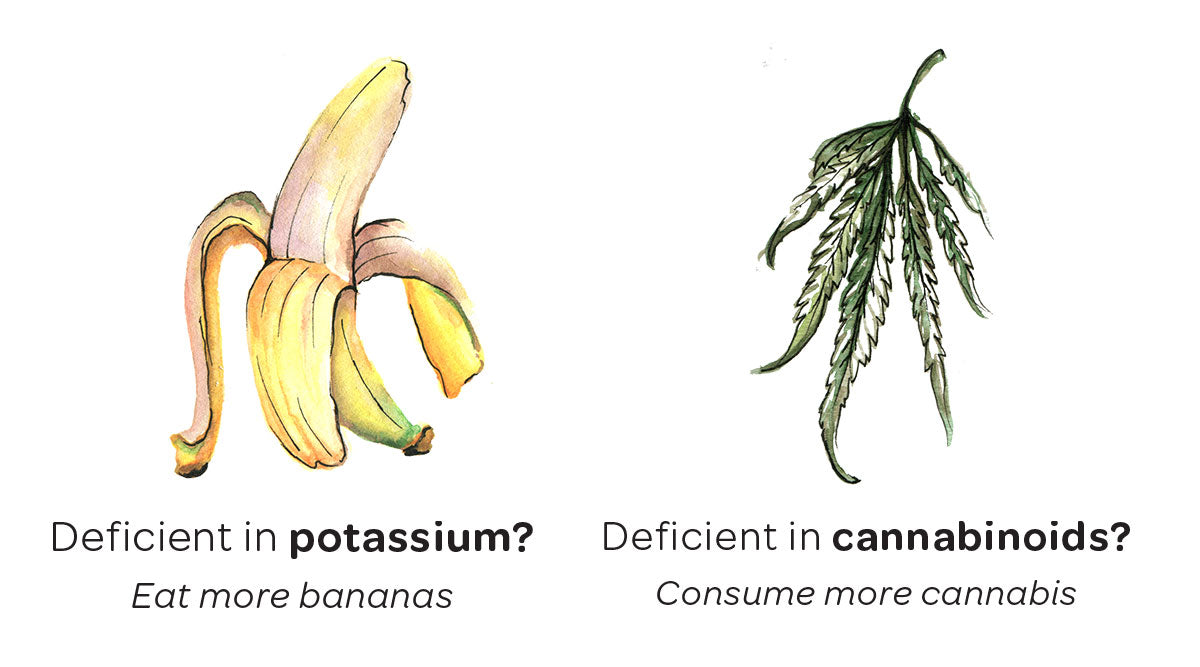 Watercolor illustration of a banana and cannabis leaf for visualizing how cannabinoids are a nutrient just like potassium