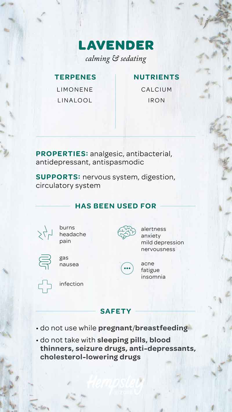 Infographic reference chart for the herb lavender