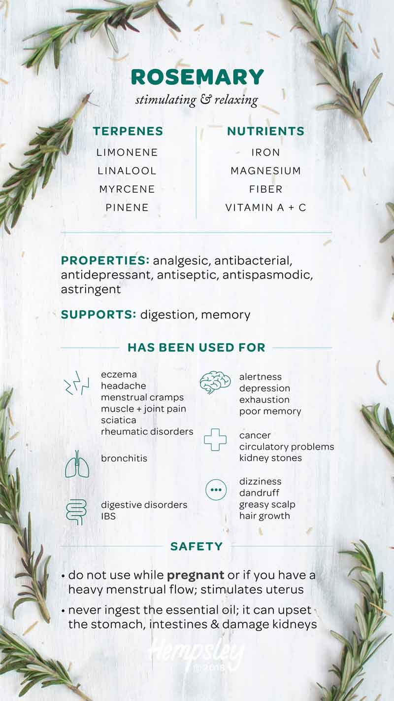 Infographic reference chart for rosemary