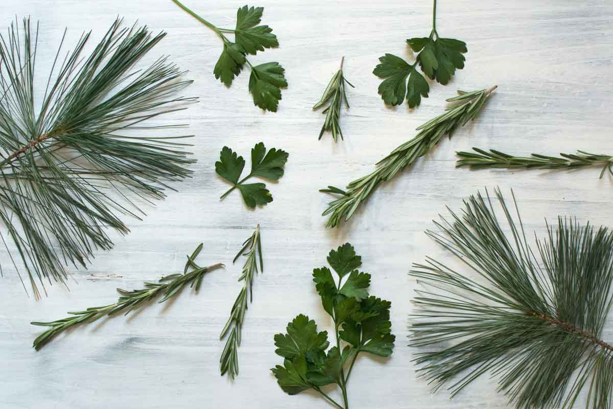 Herbs with the terpene pinene such as pine, parsley, rosemary