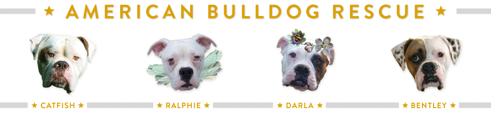 Shop American Bulldog Rescue