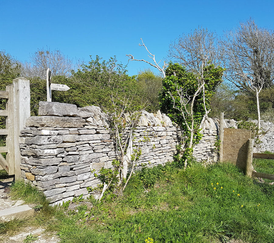 Old dry stone wall Purbeck