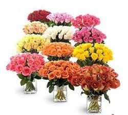 12 Arrangements of 20 Roses each in a Flower VASE.