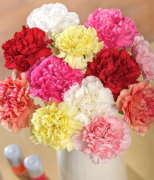 Bunch of Dozen Mixed Carnations
