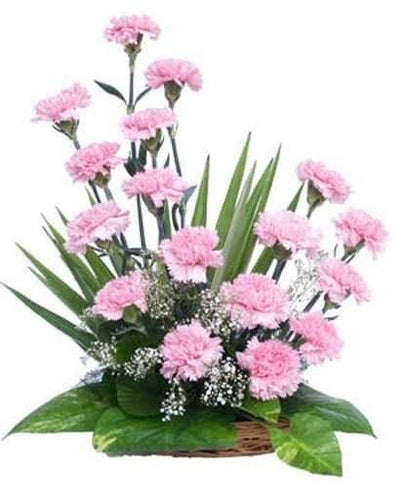 Basket arrangement of 16 Pink Carnations