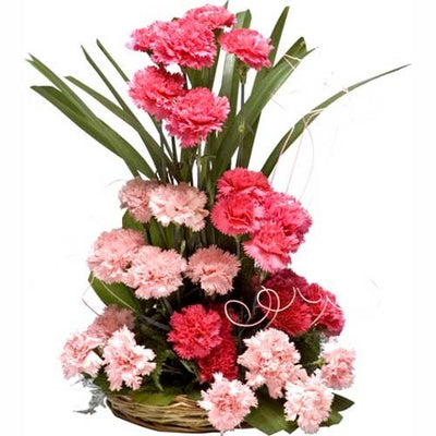 24 Pink & White Carnations Arrangement