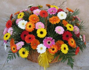 60 Colorful Gerbera's Basket with lush green fillers in it