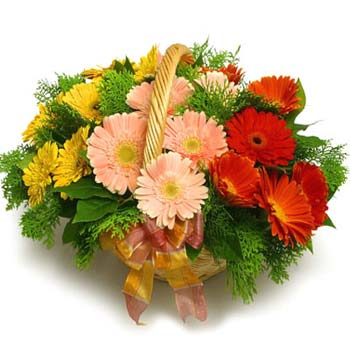 24 Mixed Gerbera