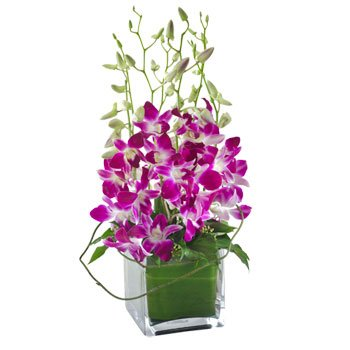 8 Purple orchids