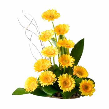 Designer Basket arrangement of 12 Yellow Gerbera