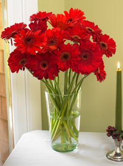 18 Stem Red Gerbera Bouquet (Add VASE separately)