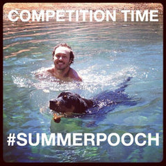 @aussiedogguy competition #summerpooch