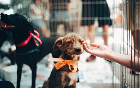 Why Some People Almost Always Adopt A Dog From Animal Shelter?