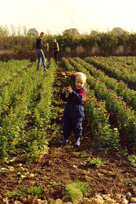 Helping dad and grandma picking flowers 1989.