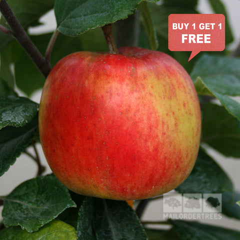 Malus George Cave - Mix n Match