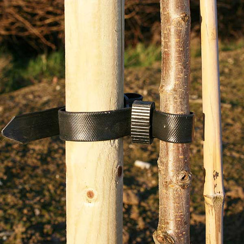 Tree Stake and Rubber Tie - 4 or 5ft