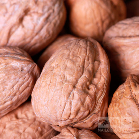 Juglans Broadview - Nuts