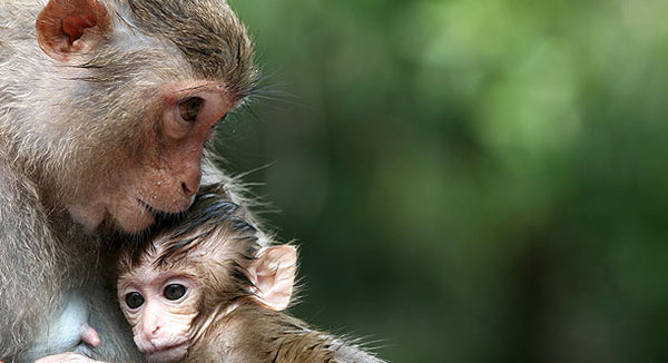 Monkey relationships