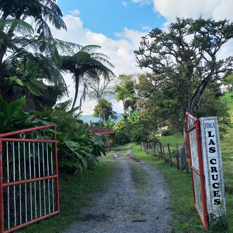 Entrance and driveway to Finca Las Cruces farm