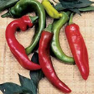 Anaheim Hot Pepper