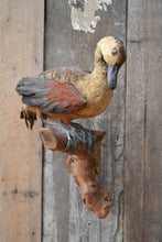 Vintage French Taxidermy Duck SOLD