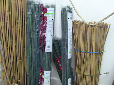 Bamboo green stakes