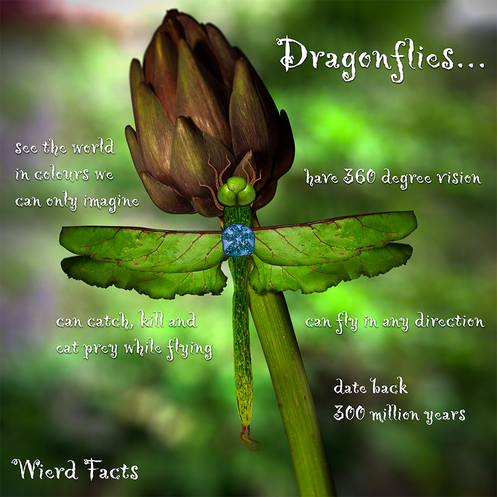 The Astonishing Dragonfly