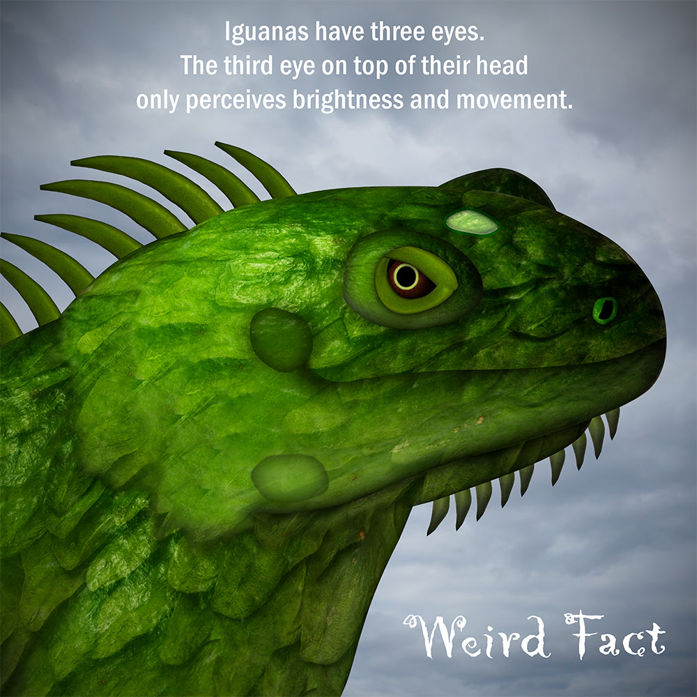 An iguana has three eyes