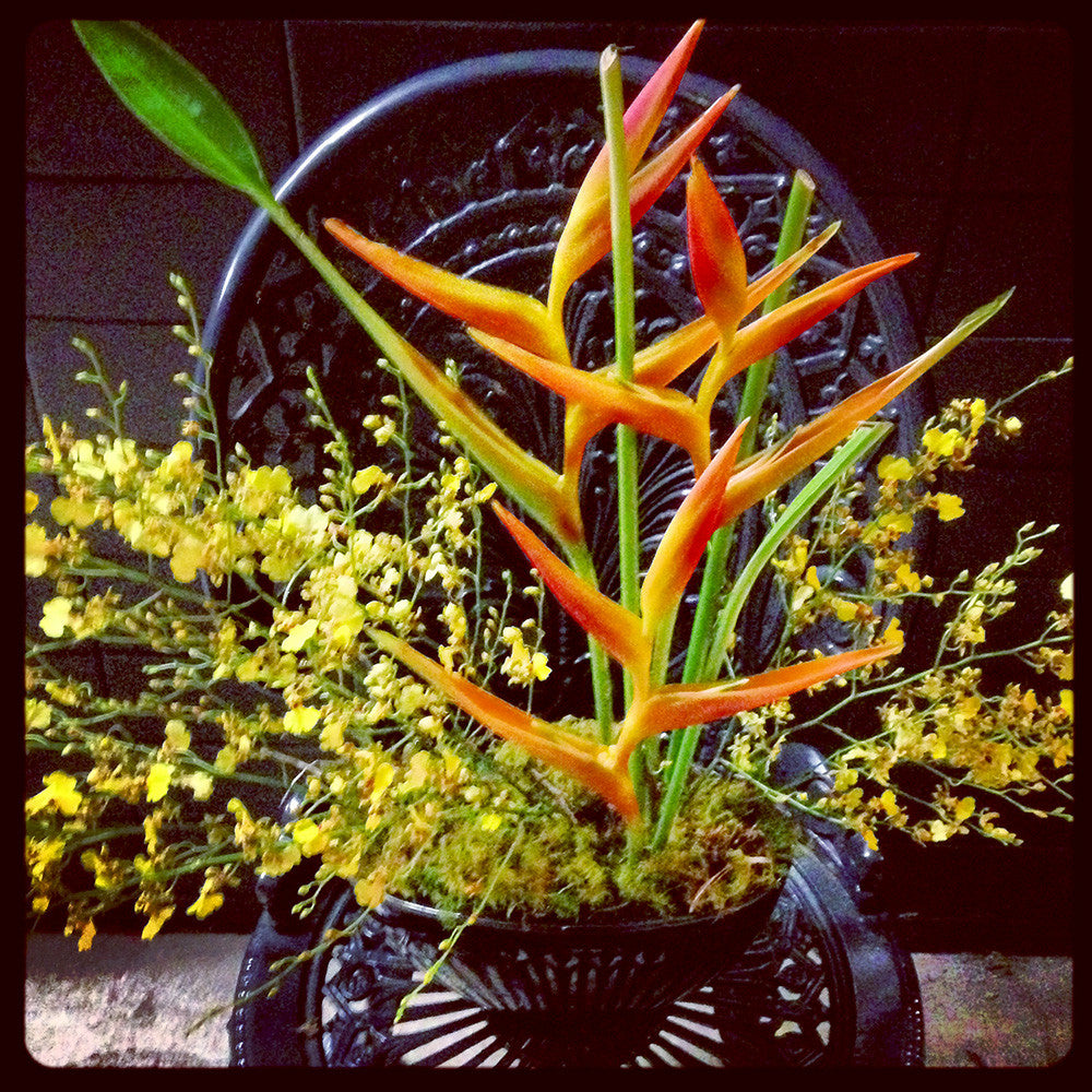 Dancing Tropicals in Bowl