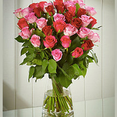 24 Red & Pink Mixed Roses in Vase