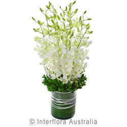 White Orchid in a Glass Vase