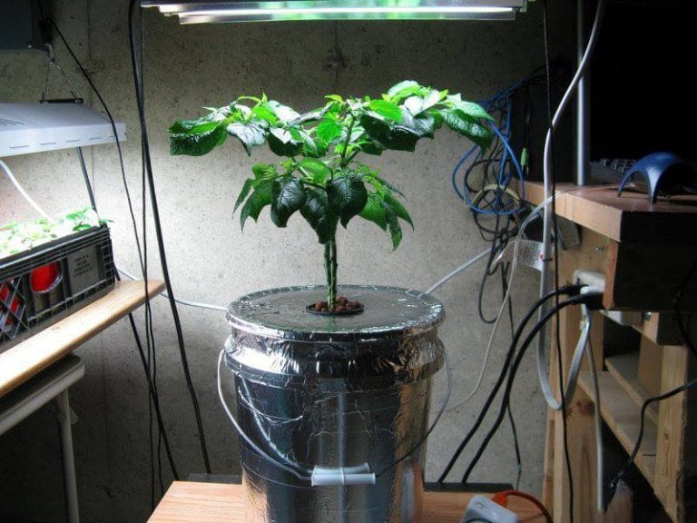 Plant on chair in grow room