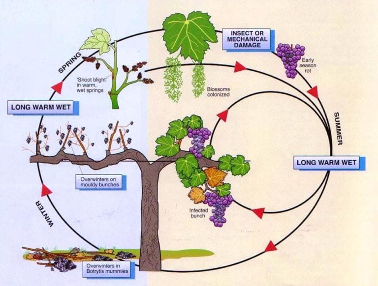 Detailed illustration of a plant life cycle