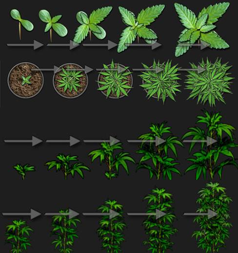 Detailed illustration of various plant stages and sizes