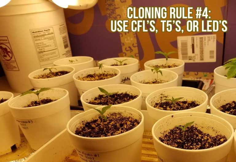 Cloning Rule #4: Use T5s, LEDs, or HIDs
