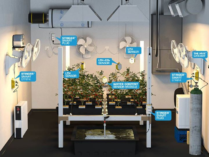 Environmental Controllers in various places around a grow room