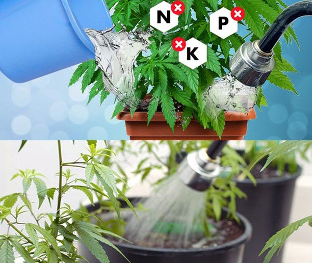 Flushing your plants