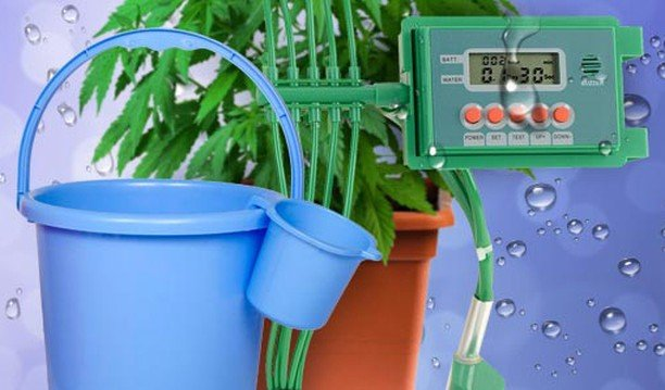 Measuring the pH of your plants