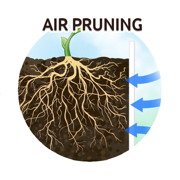 Air Pruning Roots