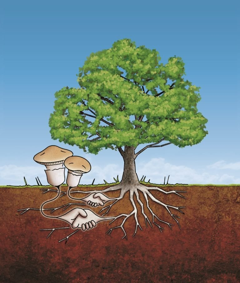Illustration of a tree with mushrooms growing out of the roots