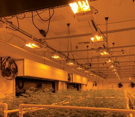 Double-ended grow lights in a large grow room.