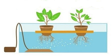 How does deep water culture (DWC) hydroponics work?