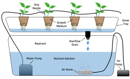 How does drip system hydroponics work?