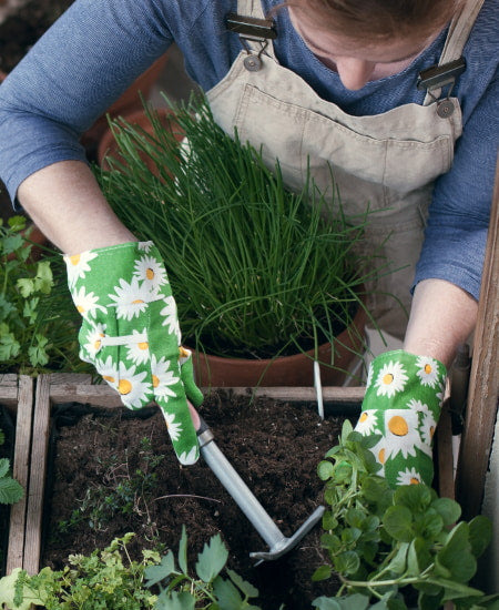 Growing your herbs and veggies is good for mental health.