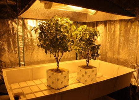 Grow tent with HPS grow light and hydro system.