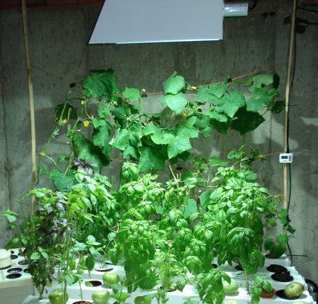 HID grow light with hydroponic system